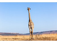 Wildlife Animals - © Chris Van Lennep