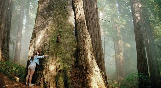 A young woman hugs a giant Redwood Cedar Tree. - © Getty Images/Aurora Open